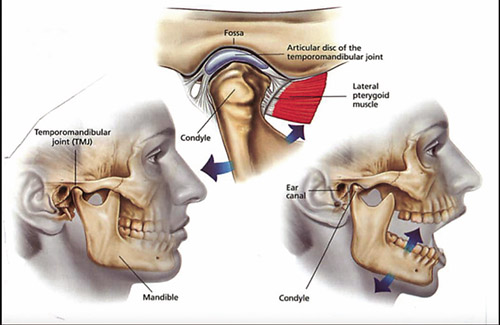 Tmj Disorder Physical Therapy Can Help Jewishlink Of New Jersey