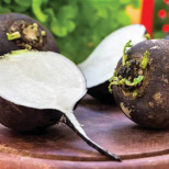 Back in Black: The Forgotten Radish