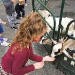 The Springboard School at LPS Visits the Petting Zoo