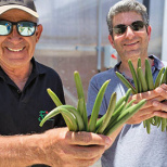 Israeli-Grown Vanilla Is About to Disrupt the Industry